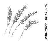 vector set of wheat ears....   Shutterstock .eps vector #1015571347