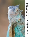 the lizard sits and looks at us ... | Shutterstock . vector #1015587784