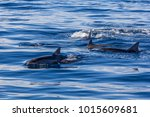 dolphins at black river ... | Shutterstock . vector #1015609681