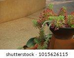 Ornamental Hemp Cactus The...