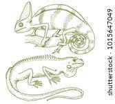 chameleon lizard  american... | Shutterstock .eps vector #1015647049
