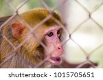 monkey is trapped in a cage.sad ... | Shutterstock . vector #1015705651