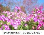 my pink flowers   Shutterstock . vector #1015725787