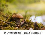 mushroom on a forest lake in... | Shutterstock . vector #1015728817