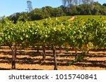 napa valley california vineyard ... | Shutterstock . vector #1015740841
