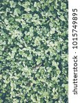 clover background with vintage... | Shutterstock . vector #1015749895