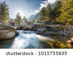 bright sunshine filtering... | Shutterstock . vector #1015755835
