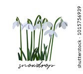 Snowdrop Vector Illustration. ...