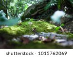 Green Moss In Rain Forest On...
