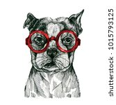 a painted dog with glasses.... | Shutterstock . vector #1015793125