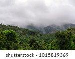 rainforest atherton tablelands... | Shutterstock . vector #1015819369