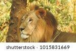 lion looking regal standing ... | Shutterstock . vector #1015831669