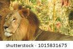 lion looking regal standing ... | Shutterstock . vector #1015831675
