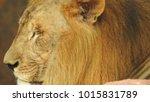 lion looking regal standing ... | Shutterstock . vector #1015831789