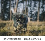 Stock photo a photograph of a cat who loves to explore the outdoors 1015839781