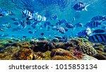 fish swim in the red sea   Shutterstock . vector #1015853134