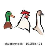 Farm Birds Portraits  Isolated...