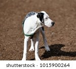 catahoula cur  state dog of... | Shutterstock . vector #1015900264