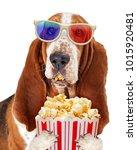 funny basset hound dog wearing... | Shutterstock . vector #1015920481
