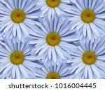 floral background of light blue ... | Shutterstock . vector #1016004445