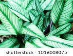 green leaf pattern on the... | Shutterstock . vector #1016008075