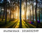 morning in the pine forest | Shutterstock . vector #1016032549