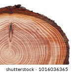 Small photo of Lurch tree trunk cross cut wood texture with a narrow light sapwood and a reddish-brown core, solid, resilient, strong, resinous, extremely resistant to decay isolated on white.