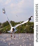 seagulls in mangrove forest... | Shutterstock . vector #1016045101