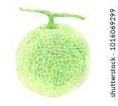 melon. watercolor painting on... | Shutterstock . vector #1016069299