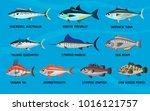 sea fish cartoon desingn vector ... | Shutterstock .eps vector #1016121757
