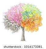 four seasons.  tree handdrawing ... | Shutterstock . vector #1016173381