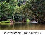 mossman river  daintree... | Shutterstock . vector #1016184919