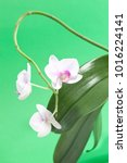 beautiful orchid on a green... | Shutterstock . vector #1016224141