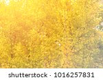 abstract ginkgo pastel color... | Shutterstock . vector #1016257831