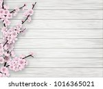 pink cherry blossom branch on... | Shutterstock . vector #1016365021