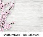 pink cherry blossom branch on... | Shutterstock . vector #1016365021