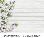 spring blooming cherry branch... | Shutterstock . vector #1016365024