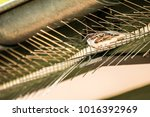 male or female house sparrow or ... | Shutterstock . vector #1016392969