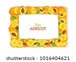 horizontal rectangle frame... | Shutterstock .eps vector #1016404621