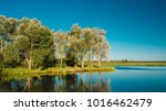 island in middle of river with... | Shutterstock . vector #1016462479