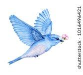 cute little blue bird.... | Shutterstock . vector #1016496421