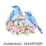 cute little blue birds with...   Shutterstock . vector #1016497639