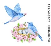 cute little blue bird with nest ... | Shutterstock . vector #1016497651