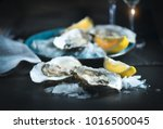 fresh oysters close up on blue... | Shutterstock . vector #1016500045