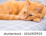 cute red cat   Shutterstock . vector #1016505925