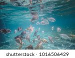 tropical caribbean fishes mix... | Shutterstock . vector #1016506429