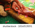 south indian wedding rituals ... | Shutterstock . vector #1016515051