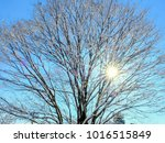 the snowfall estimated in a... | Shutterstock . vector #1016515849