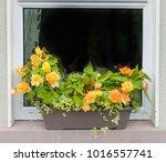flowers in bloom in a window...   Shutterstock . vector #1016557741
