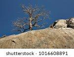 outback scenery near chillagoe  ... | Shutterstock . vector #1016608891